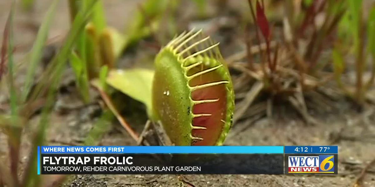 Annual Flytrap Frolic set for Saturday