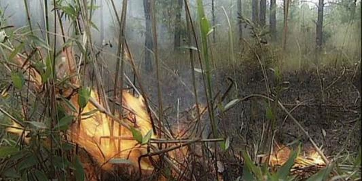 Orton conducting controlled burn of 238 acres today