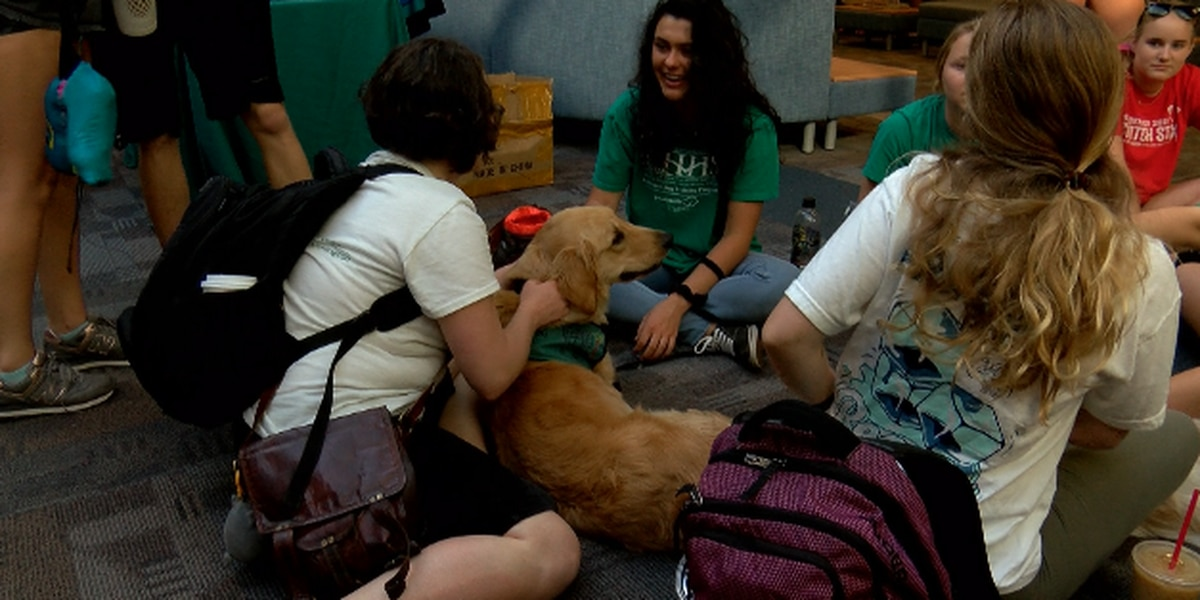 Local service dog program, paws4people, provided therapy dogs for UNCW students during finals week.
