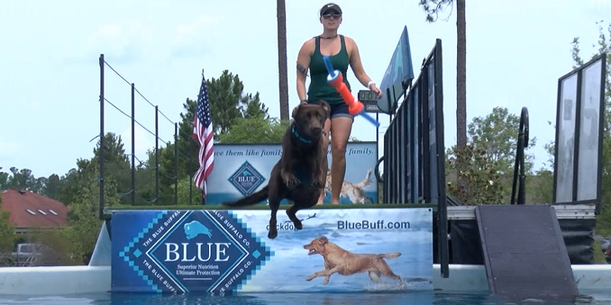 Dock Dogs agility competition makes its way to local area