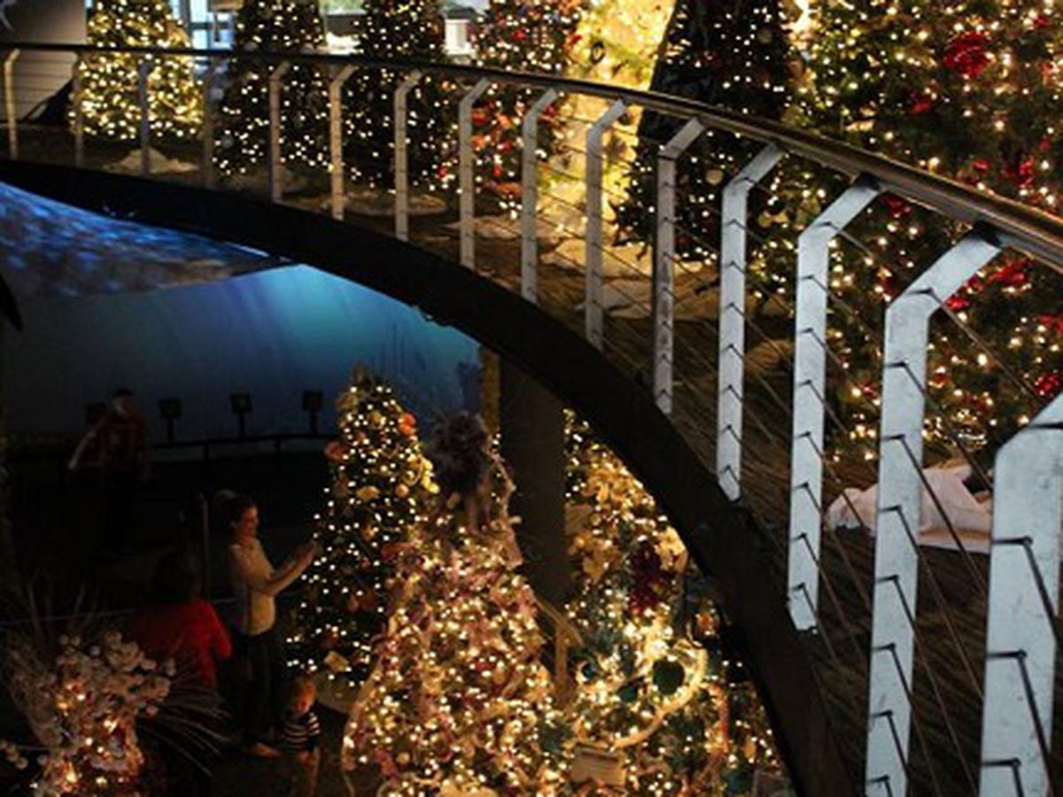 Cape Fear Festival of Trees kicks off at Fort Fisher Aquarium this week