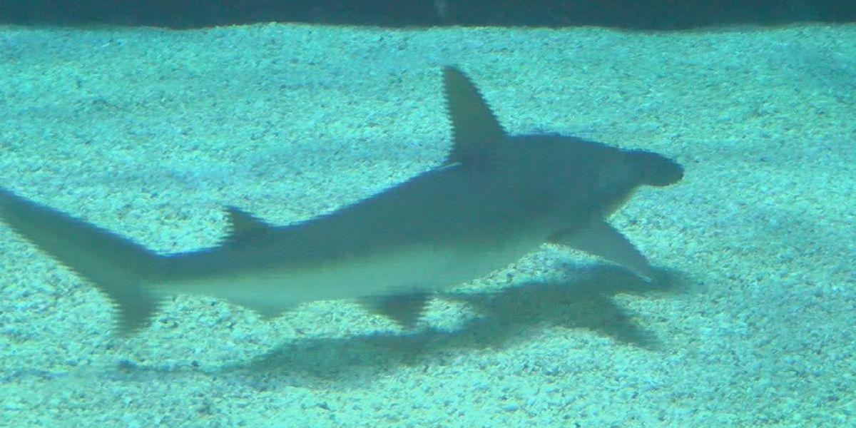 Teen bitten by shark at Atlantic Beach