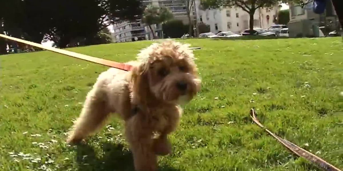 Dogs sickened after eating drugs at San Francisco park