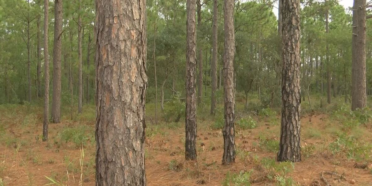Learn more about controlled burns at the Fire in the Pines Festival