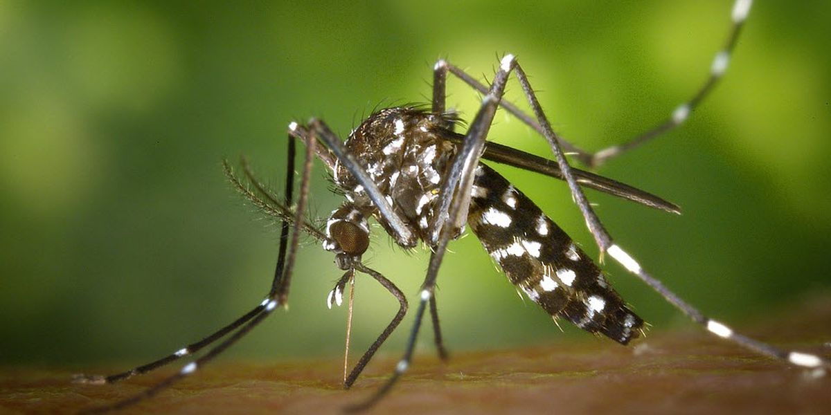 Aerial mosquito spraying starts Tuesday night in Brunswick Co.; Pender Co. eschews aerial treatments