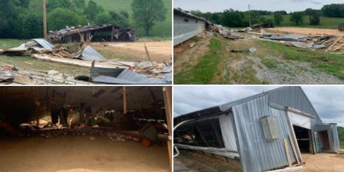 About 4,000 turkeys killed as powerful storm strikes South Carolina farm