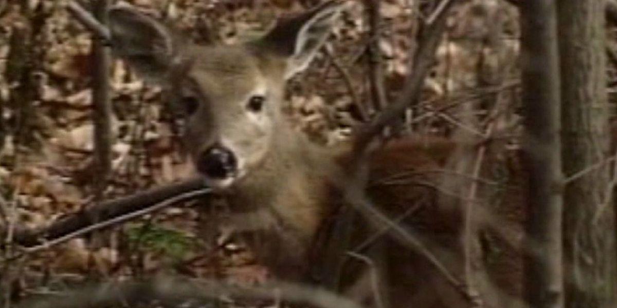 North Carolina wildlife officials warn of deer disease