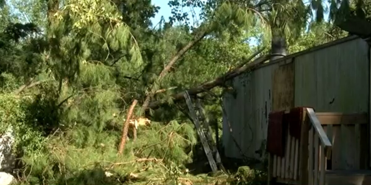 Tree falls through family's Pender County home