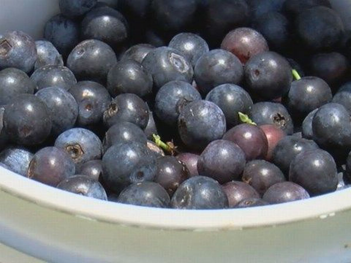 Highway 6: Blueberry recipes sent in by viewers