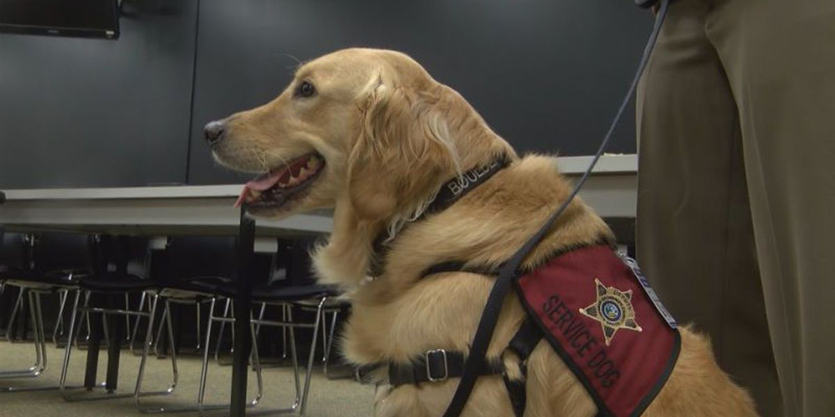 New canine deputy provides comfort to trauma victims