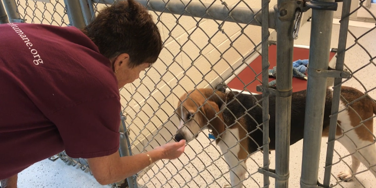 Highway 6: Pender County Humane Society celebrates 10 years of saving lives