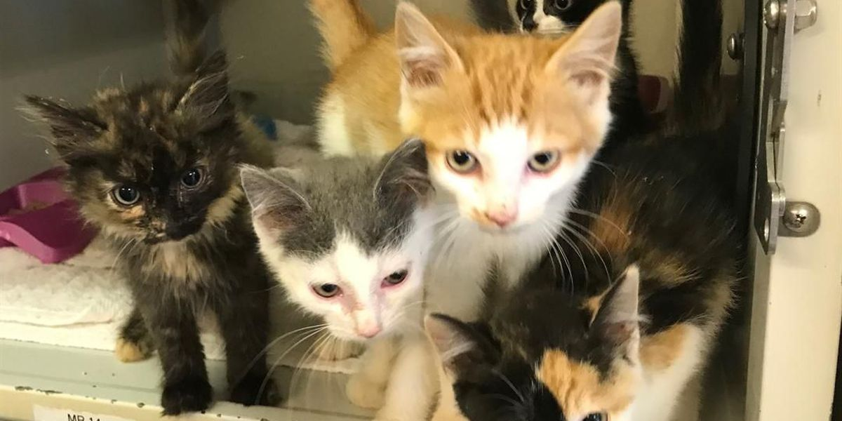 Dozens of cats find new homes in Pender County