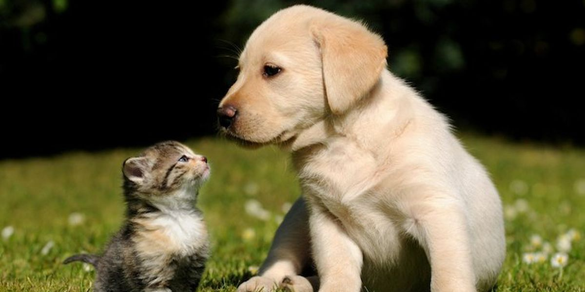 Free rabies clinic for New Hanover County residents. Shelter volunteers needed,