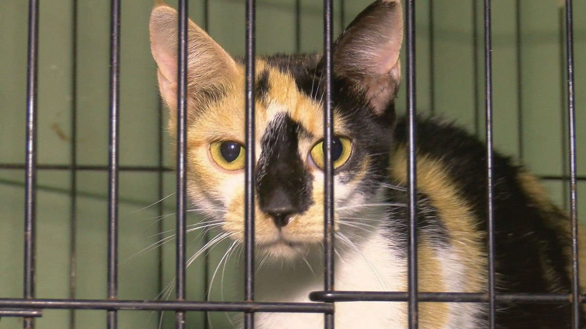 Clear The Shelters: Kennels near capacity in Columbus County