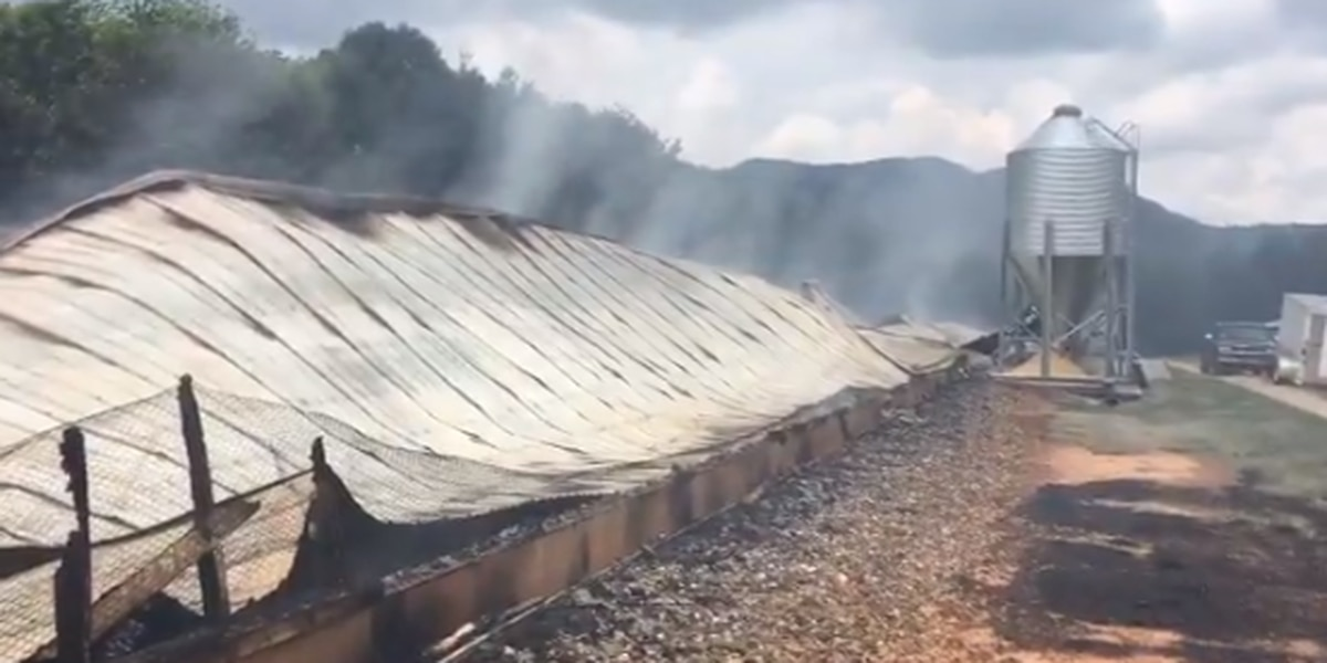 Massive fire destroys N.C. chicken house, kills 11K chickens, causes more than $300k of damage