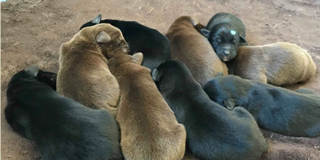 Police rescue puppies thrown in garbage in Wisconsin; man arrested