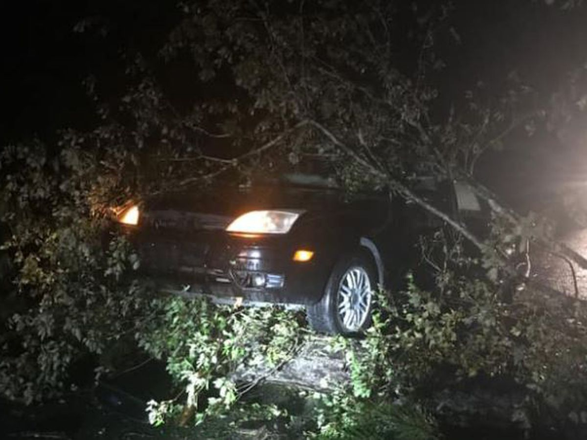 TRAFFIC ALERT: Trees fallen over Green Swamp Road; U.S. 17 has reopened near Shallotte