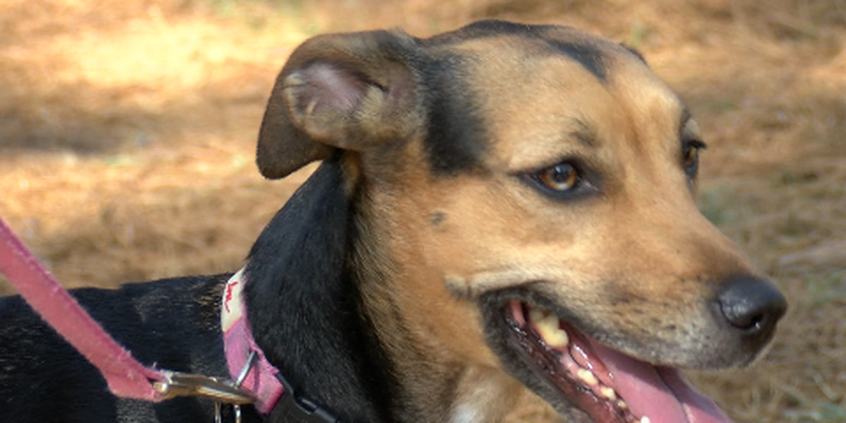 Veterinarian talks tips for pets in hot weather