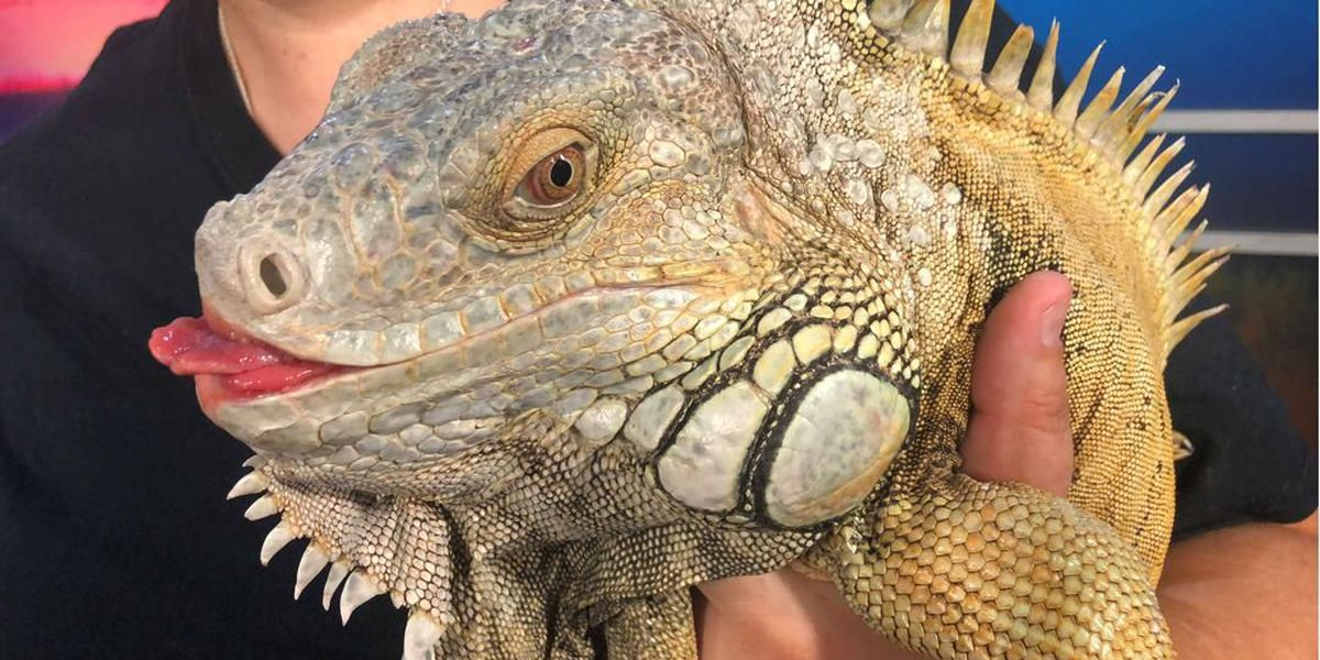 Rockin' Reptile Bash will help scaly creatures