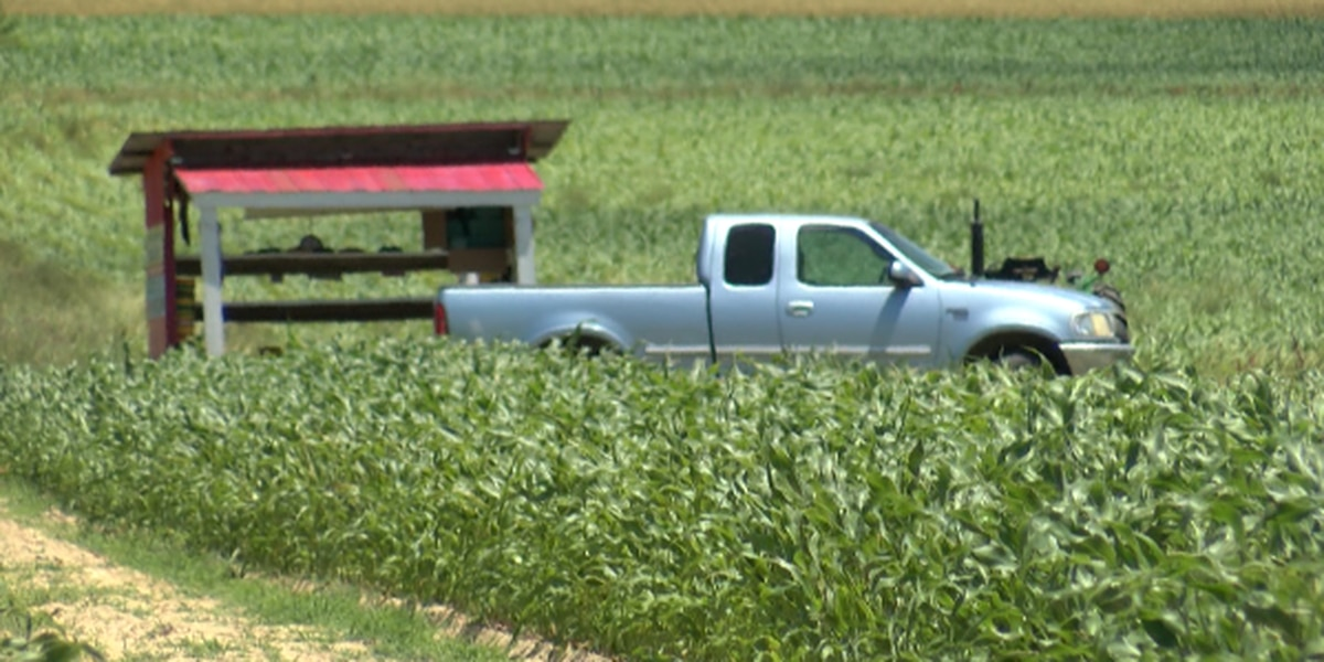 Cerro Gordo farmer says although tariffs are hurting his business, he supports trade war