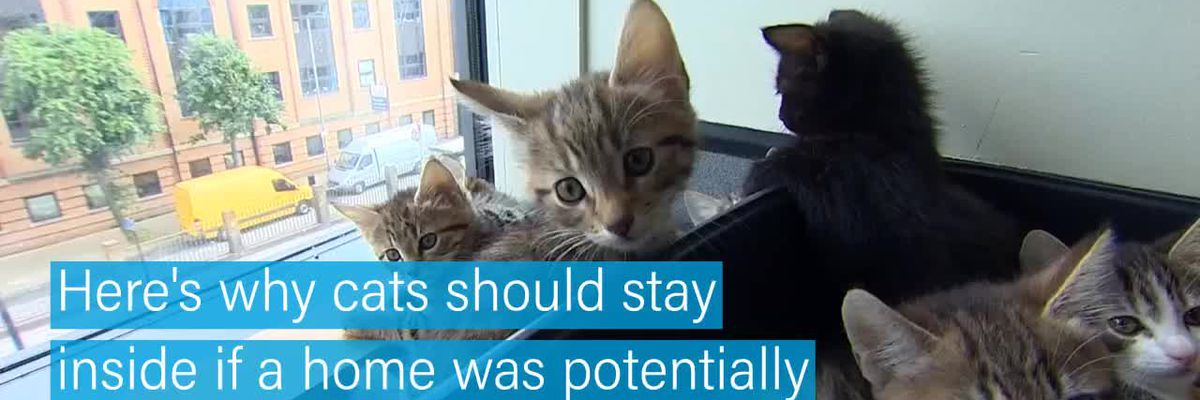Why cats potentially exposed to coronavirus should stay inside