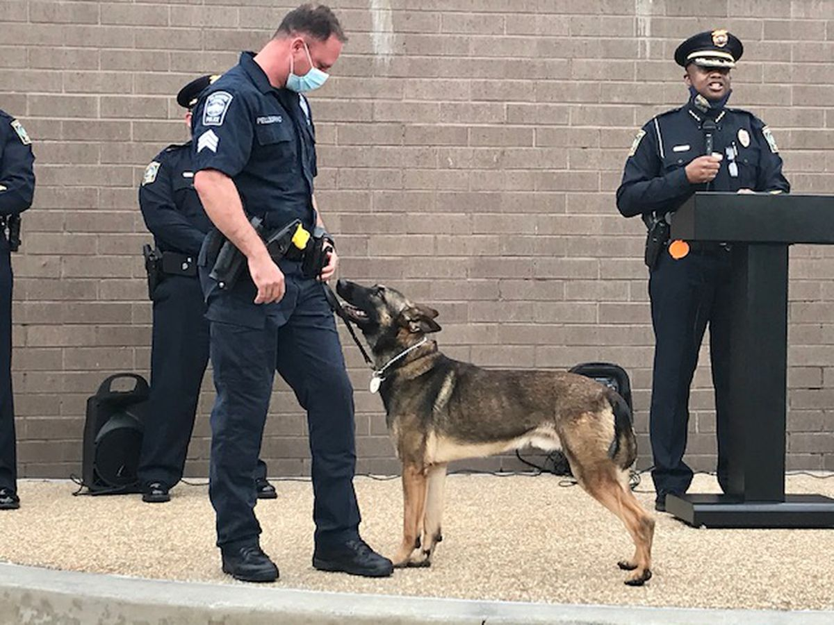 Wilmington police swear in their newest K9s