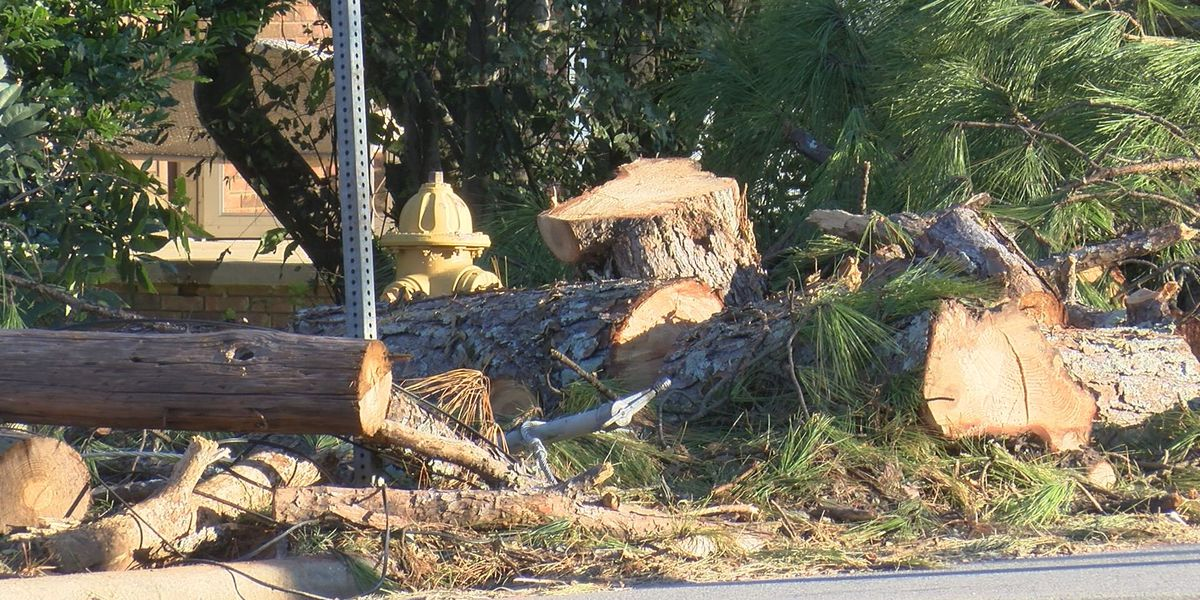 Judge bars tree-removal company accused of price gouging from collecting fees