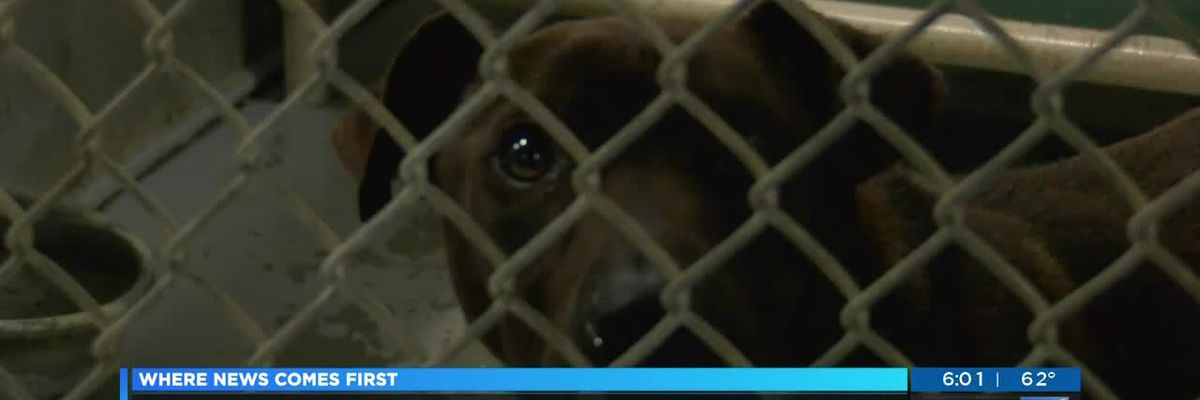 Columbus County Animal Shelter disputes claims 3 dogs were living in 'inhumane conditions'