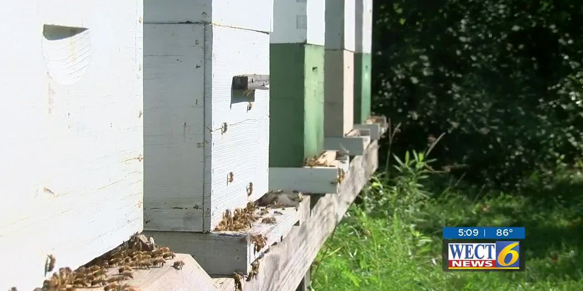 Environmental group abuzz about saving bees