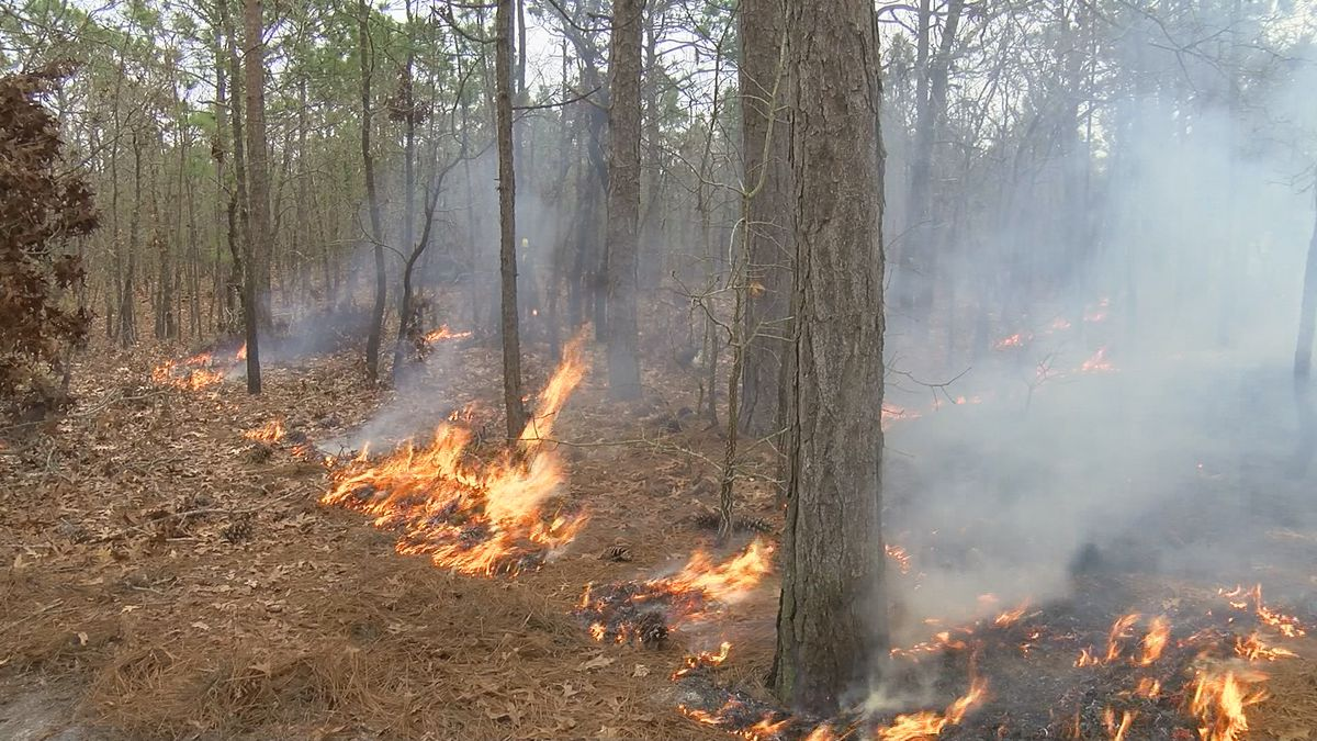 Crews to conduct 26-acre controlled burn at Orton Plantation