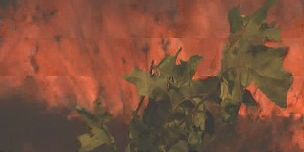 Fire in the Pines Festival highlights the importance of fires to grow forests