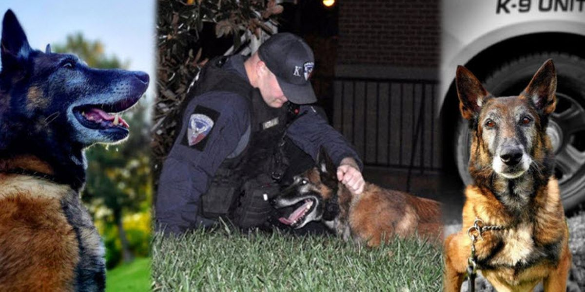 Retired Statesville PD K-9 passes away after years on the force
