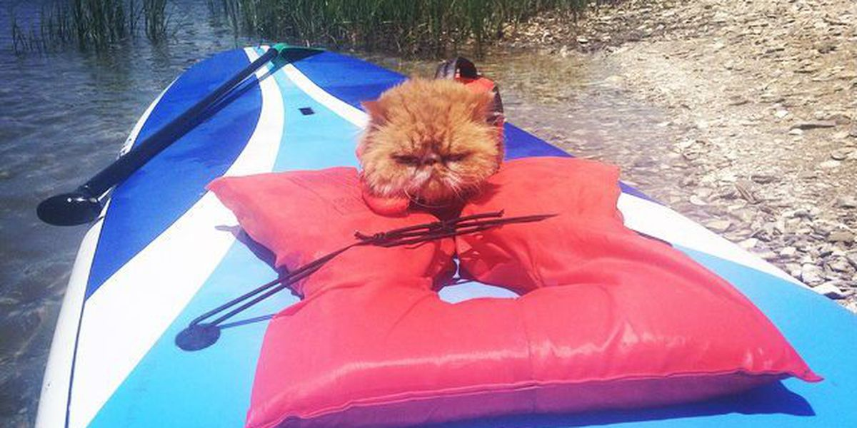Paddleboard kitty takes on Wrightsville Beach