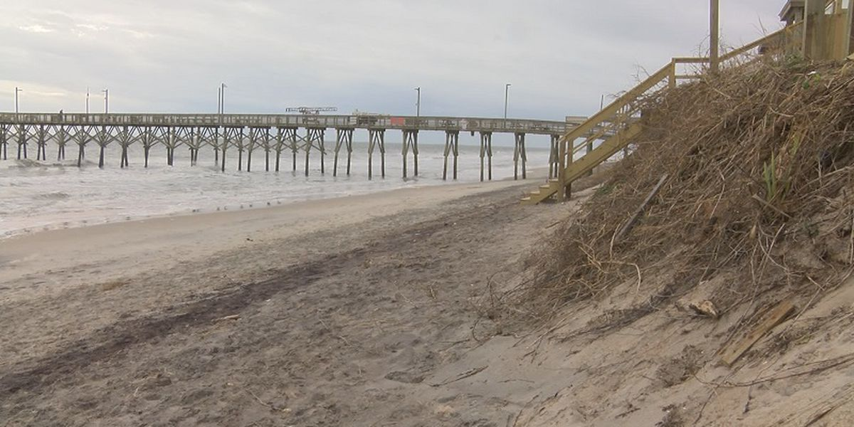 Surf City hosting dune restoration day using recycled Christmas trees