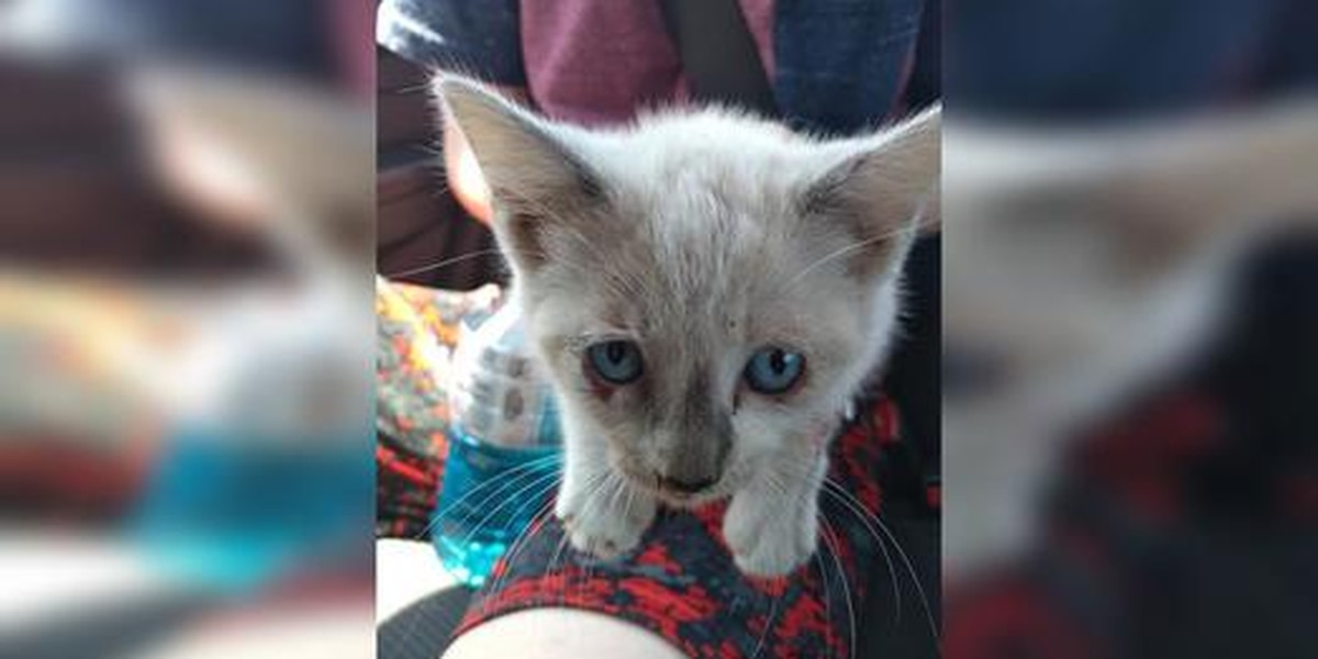 Craven County reports kittens being abandoned on Neuse River Bridge & Highway 70