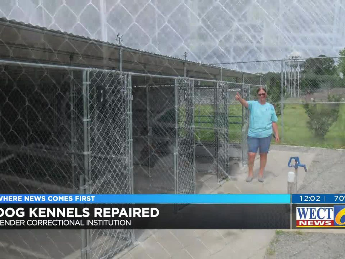 After five months of repairs, dog rescue group is back in business