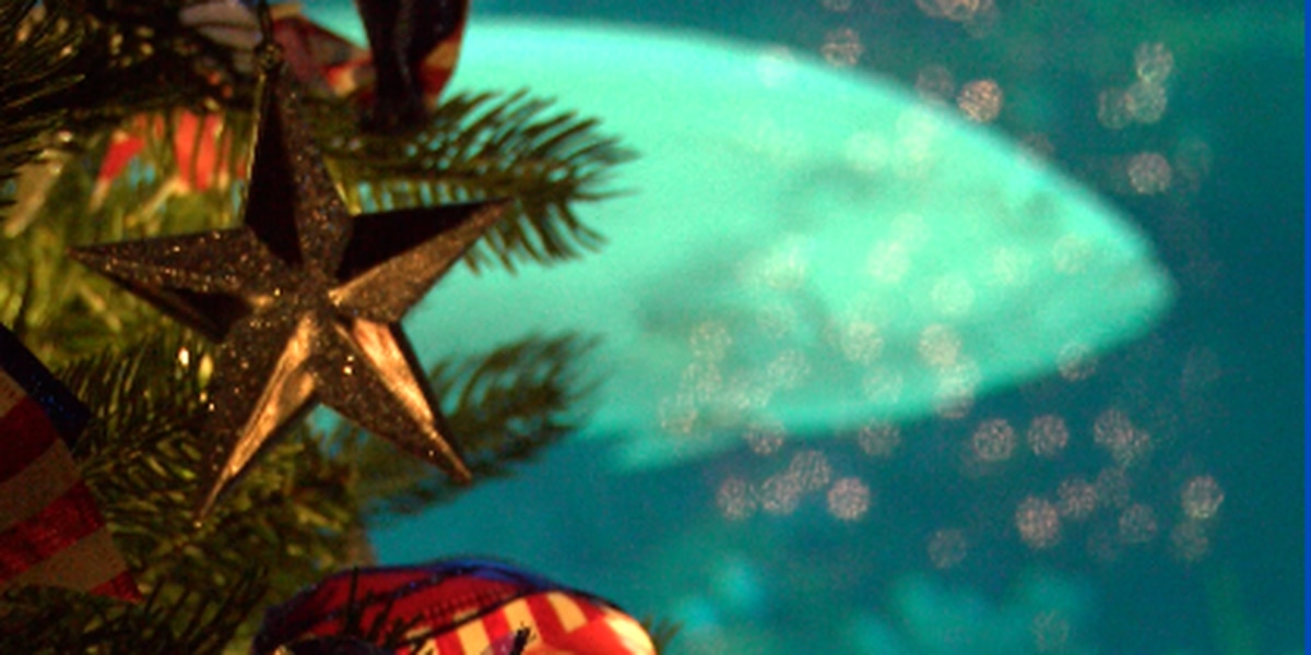 Highway 6: Cape Fear Festival of Trees transforms aquarium into winter wonderland