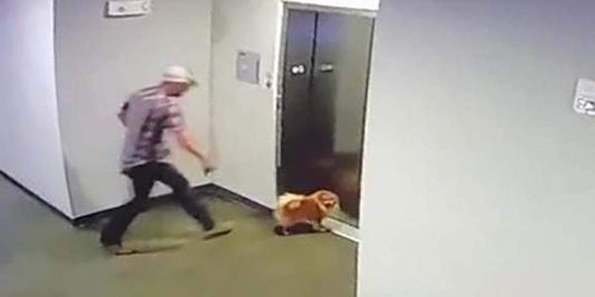 Man credited with saving dog after leash stuck in elevator