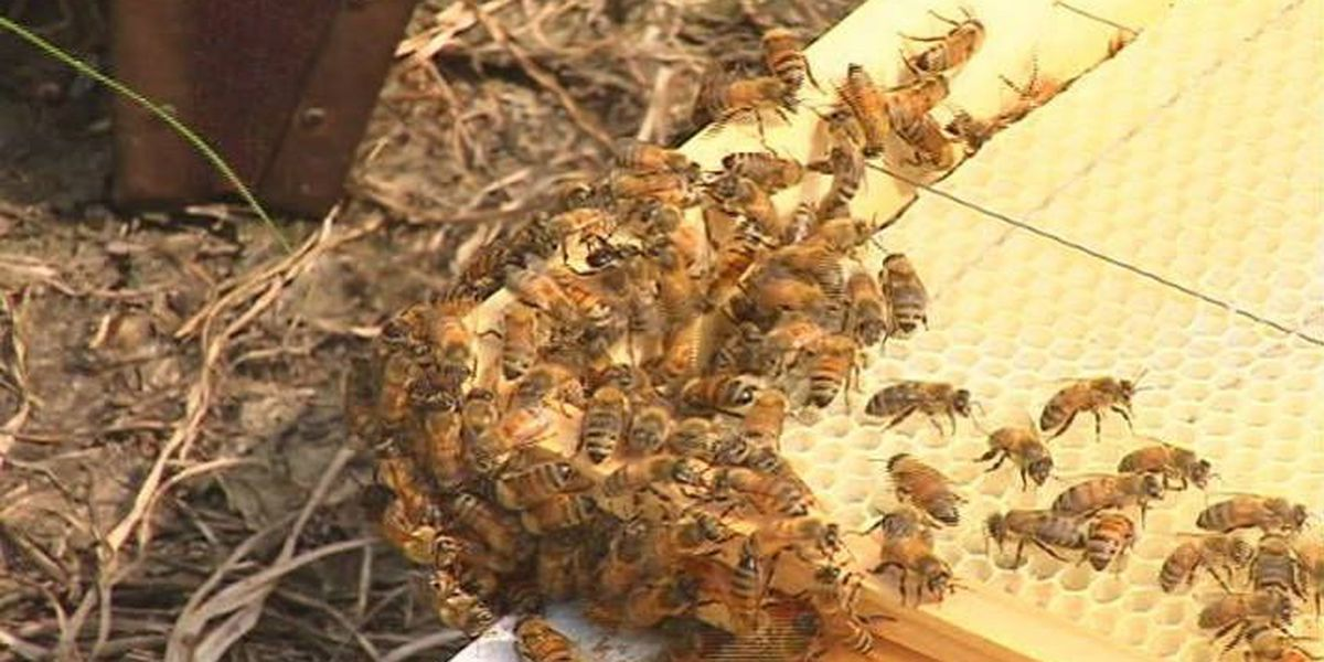Honey bees & butterflies vital for produce production