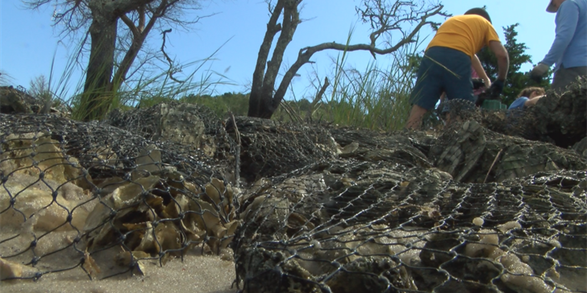 Volunteers needed to help with shoreline protection project