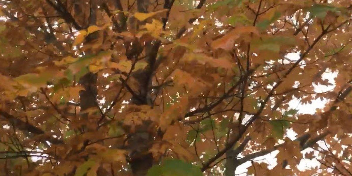 Hurricane Michael could affect fall colors in NC