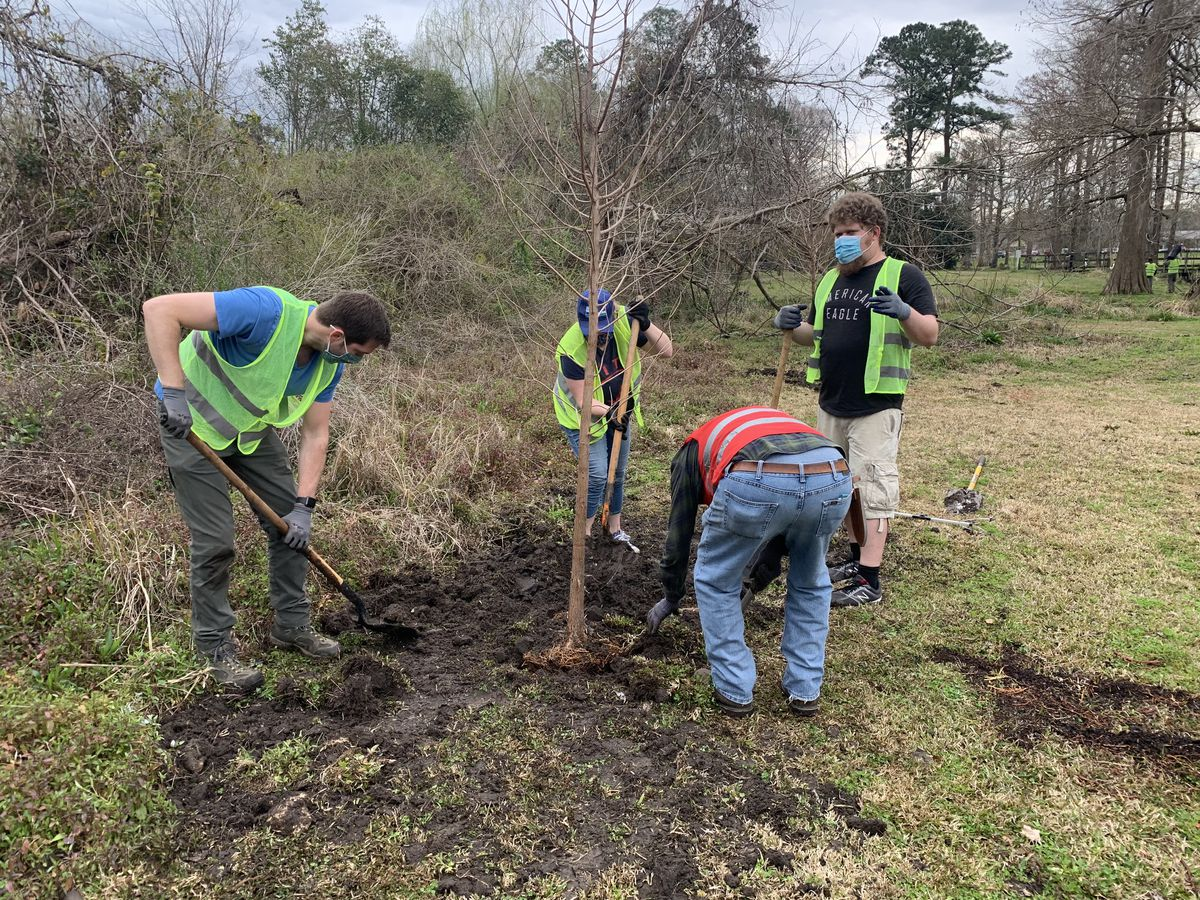 Local communities among the 83 recognized in North Carolina for tree preservation