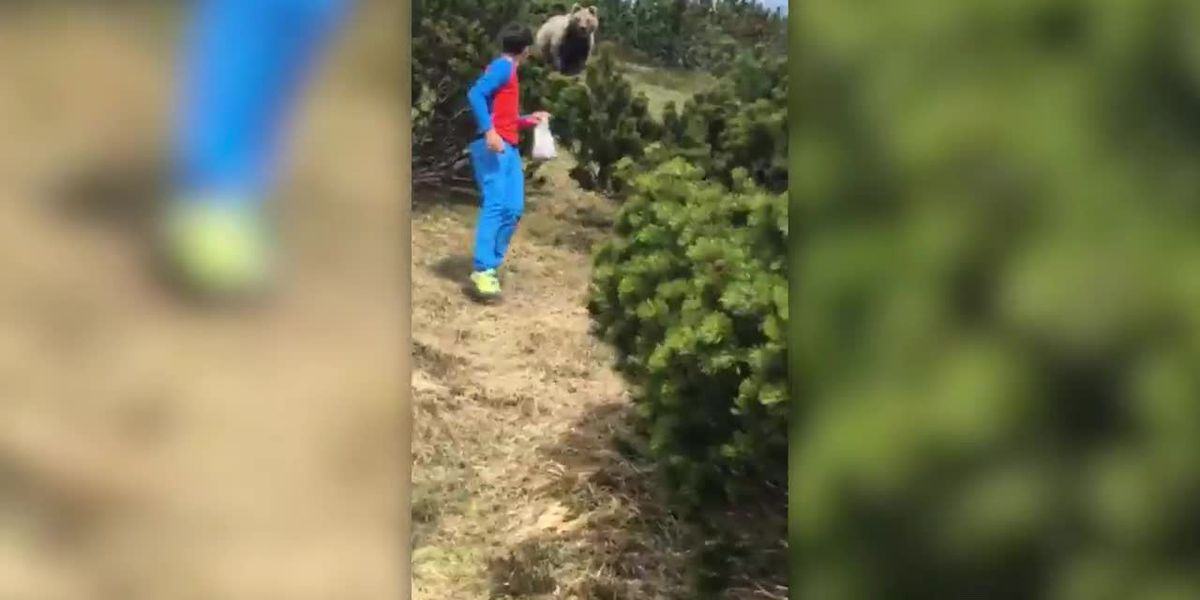 Boy stays calm while bear trails him in mountains of Italy