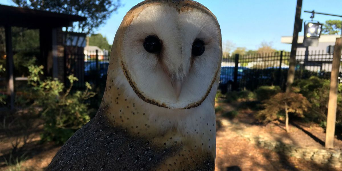 Help our feathered friends fly high at the Owl Howl