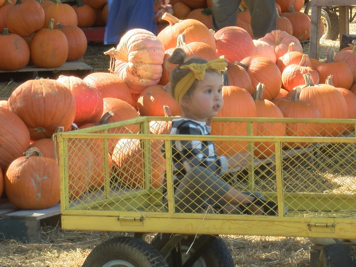 Wesley Memorial pumpkin patch opens amid COVID-19