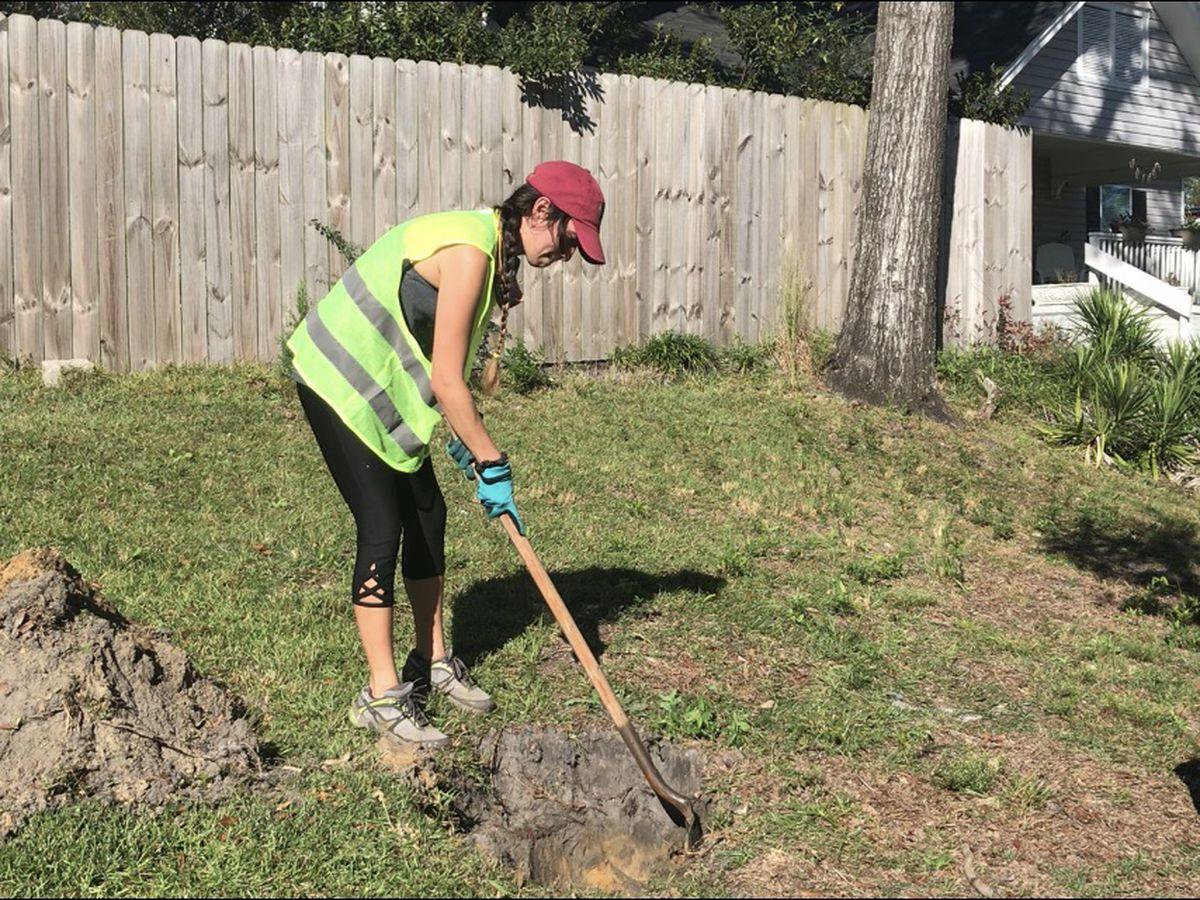 Volunteers to plant 100 trees at Longleaf Park