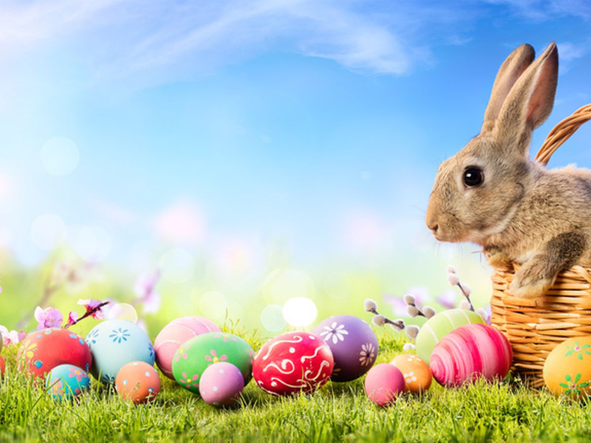 Rabbits don't make the best Easter gift