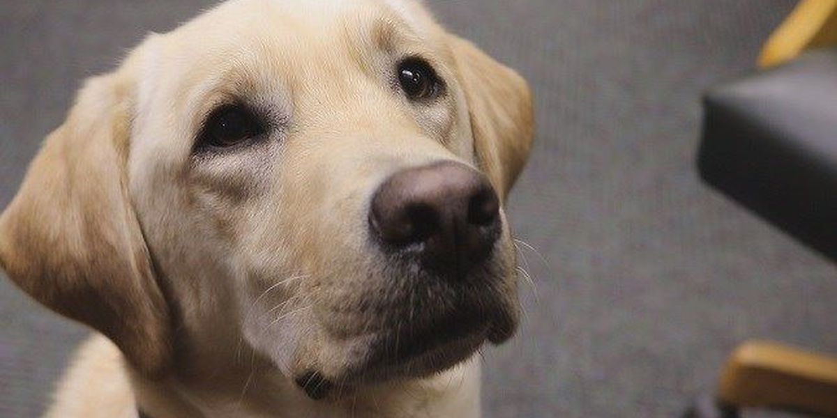 NHC courthouse gets facility therapy dog