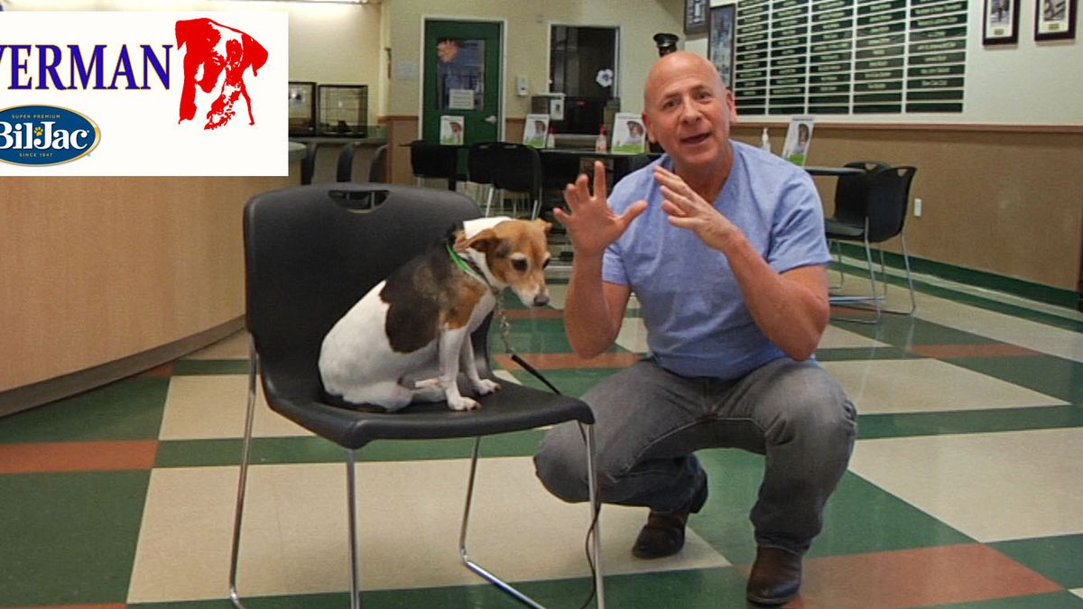Celebrity dog trainer shares tips for pet owners