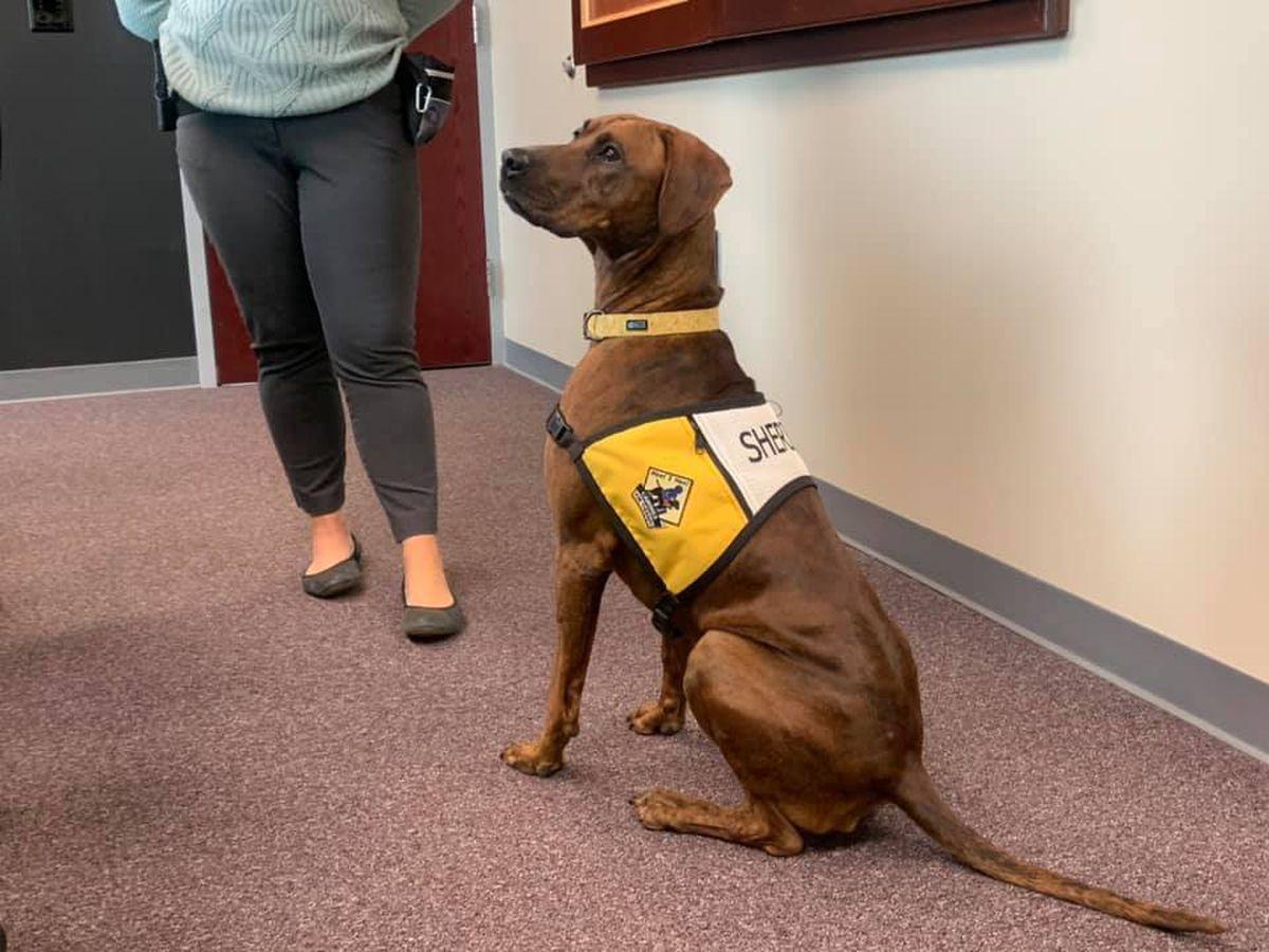 New Hanover County Sheriff's Office introduces K9 Mara